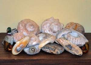 shell & duck collection
