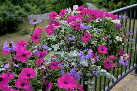 summer flowers