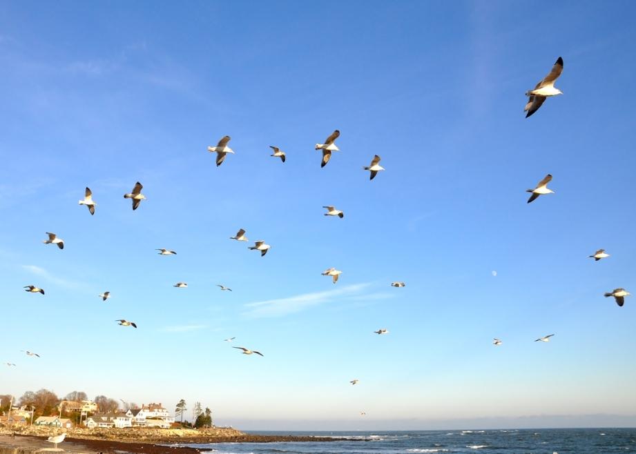 Seaguls float w