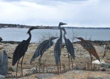 Portsmouth birds 1