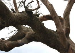 Up tree 3