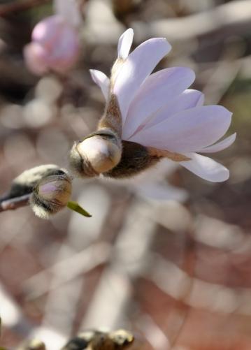 wSpring blossom