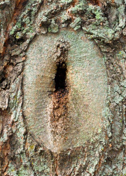 tree hole