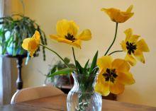 Tulips for Kim 2