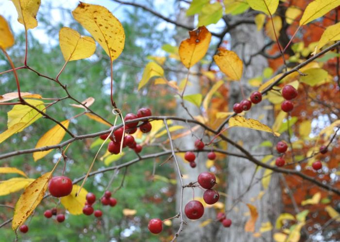 Berries w